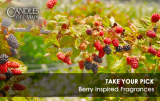 berry-Banner